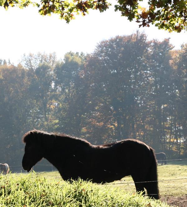 ...und Pferde genießen die Sonne