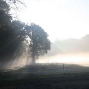 Sonnenaufgang auf der Waldwiese